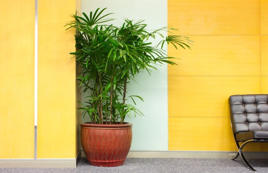 3 Tips for Creating an Eco-Friendly Office Space