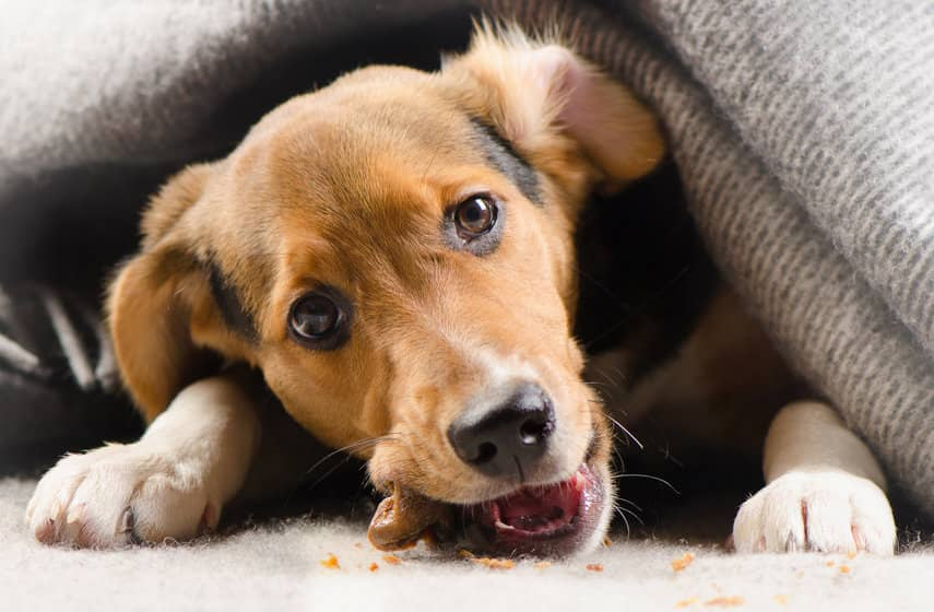 What Types of Flooring is Best for Dogs?