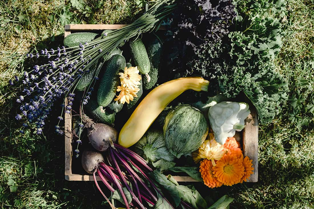 Edible Landscaping: 18 Plants to Enhance to Your Yard